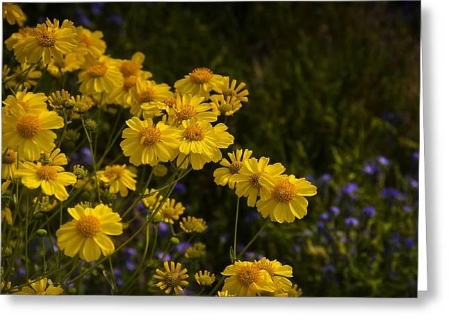 Color Me Yellow  Greeting Card by Saija  Lehtonen