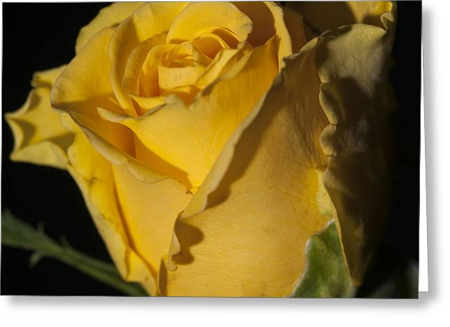 Color Of Love Greeting Card by Miguel Winterpacht