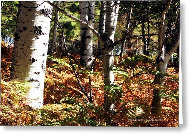 Color On The Trail Greeting Card by Michele Richter