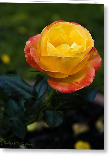Color Saturation Greeting Card by Robert Culver