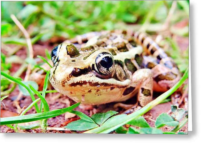 Color Wood Frog Greeting Card by Art Dingo