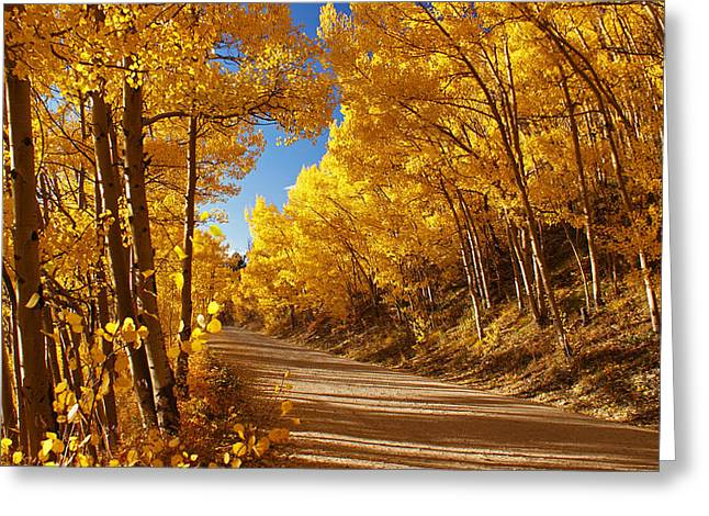 Colorado Aspen Tunnel  Greeting Card by Michael J Bauer