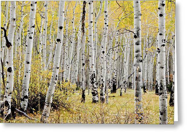 Greeting Card featuring the photograph Colorado Aspens by Geraldine Alexander