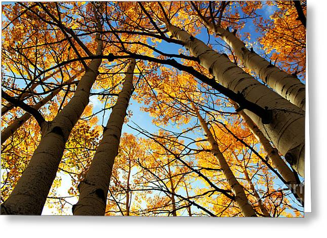 Colorado Autumn Greeting Card