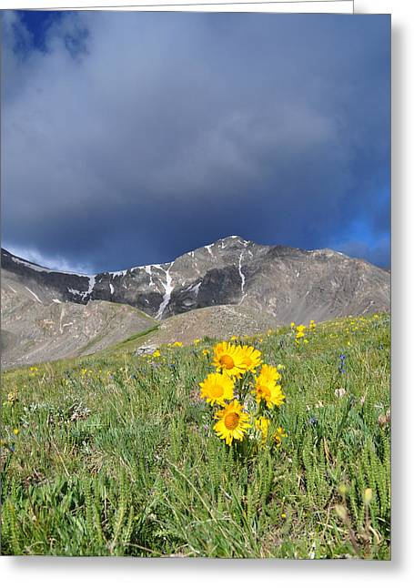 Colorado Beauty Greeting Card by Aaron Spong