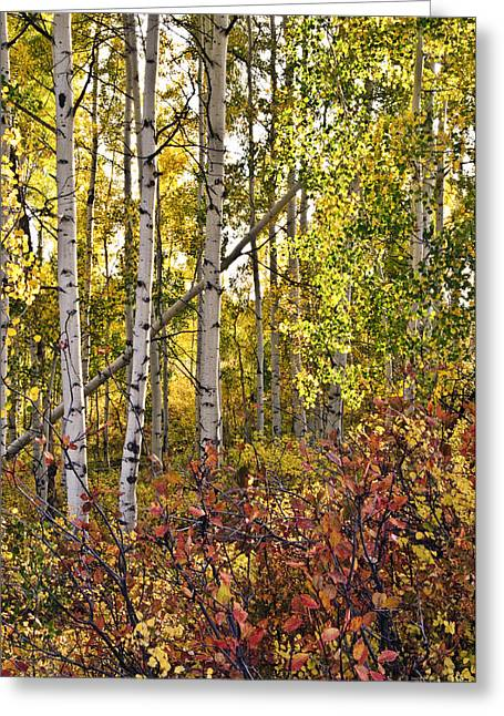 Greeting Card featuring the photograph Colorado Changing Eight    by Eric Rundle