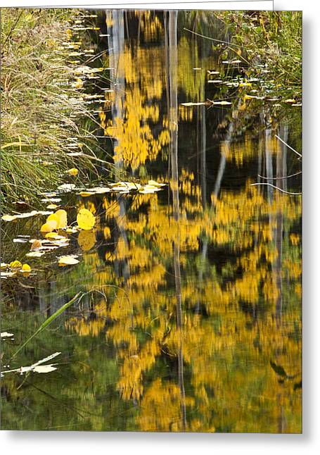 Greeting Card featuring the photograph Colorado Changing Five  by Eric Rundle