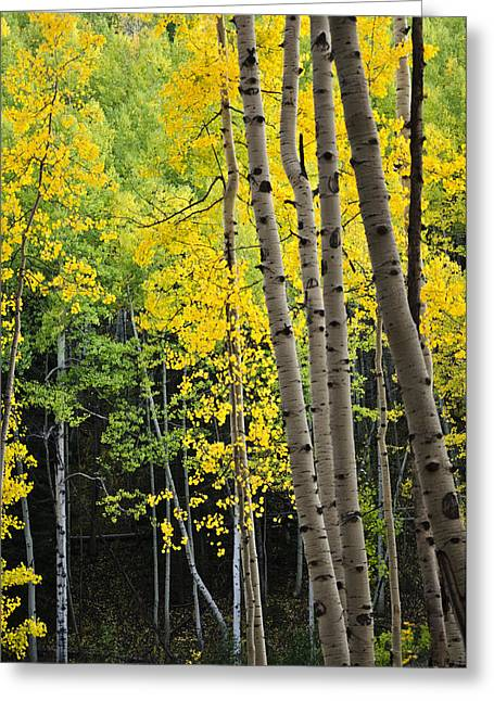 Greeting Card featuring the photograph Colorado Changing Two  by Eric Rundle