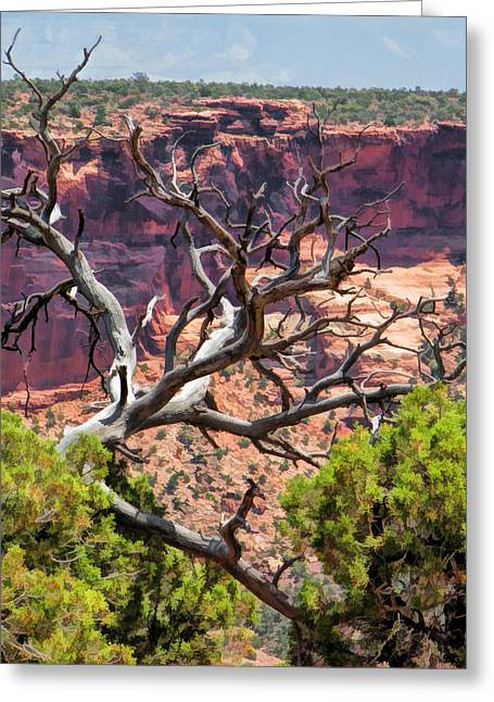 Colorado National Monument Dead Branches Greeting Card