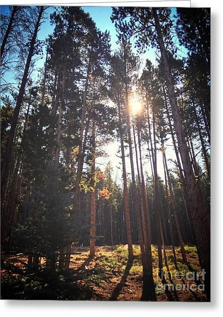 Colorado Pines Greeting Card by Garren Zanker