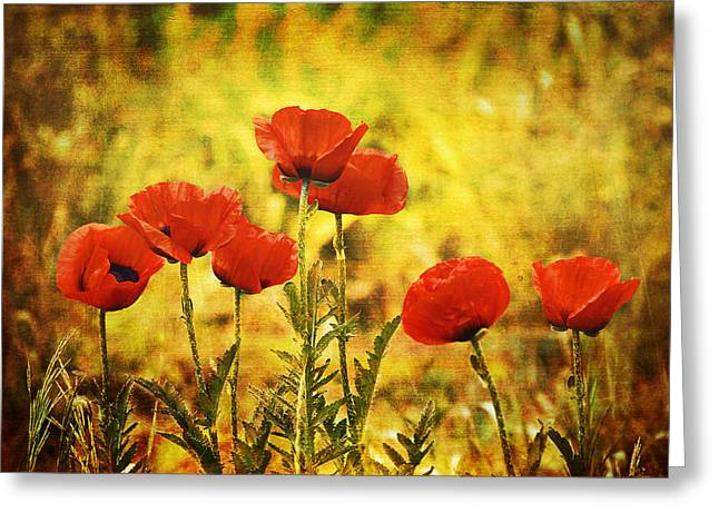 Colorado Poppies Greeting Card by Tammy Wetzel