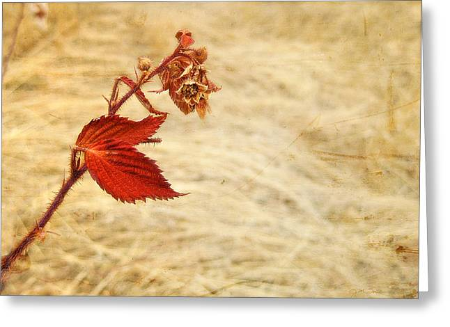 Colorado Red Autumn Leaf Greeting Card by Julie Magers Soulen