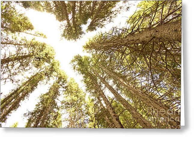 Colorado Rocky Mountain Forest Ceiling Greeting Card by James BO  Insogna