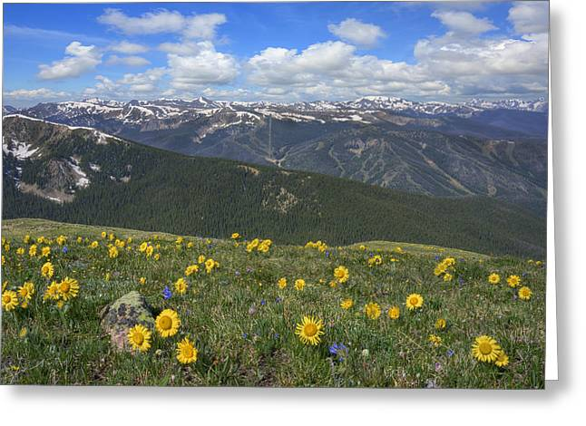 Colorado Wildflower Images - Wildflowers With Winter Park In The Greeting Card by Rob Greebon