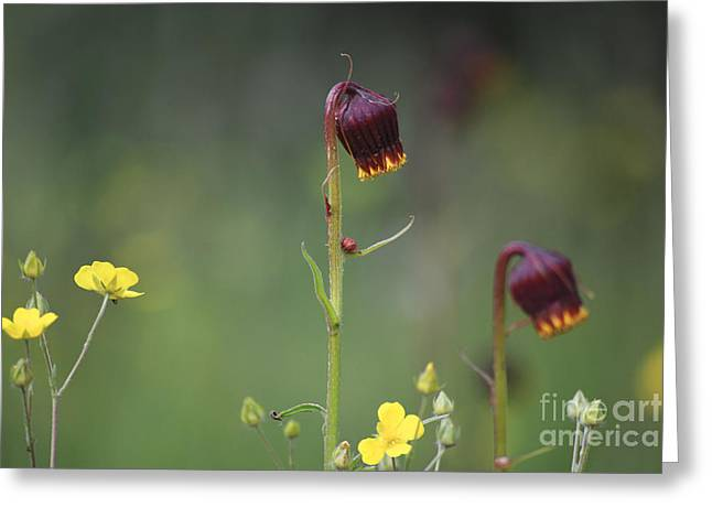 Greeting Card featuring the photograph Colorado Wildflowers by Kate Avery