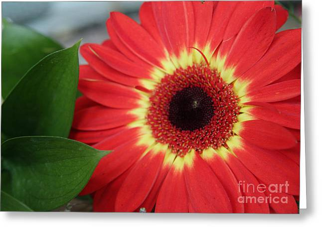 Colorburst  Greeting Card by Mary Lou Chmura