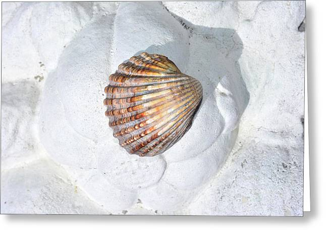 Colored Seashell  Greeting Card