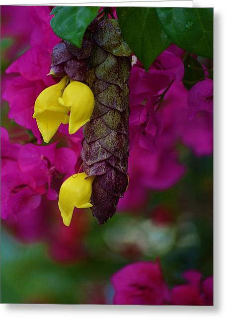 Colorful Abundance Greeting Card