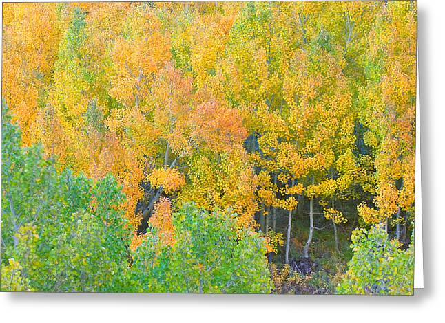 Greeting Card featuring the photograph Colorful Aspen Forest - Eastern Sierra by Ram Vasudev