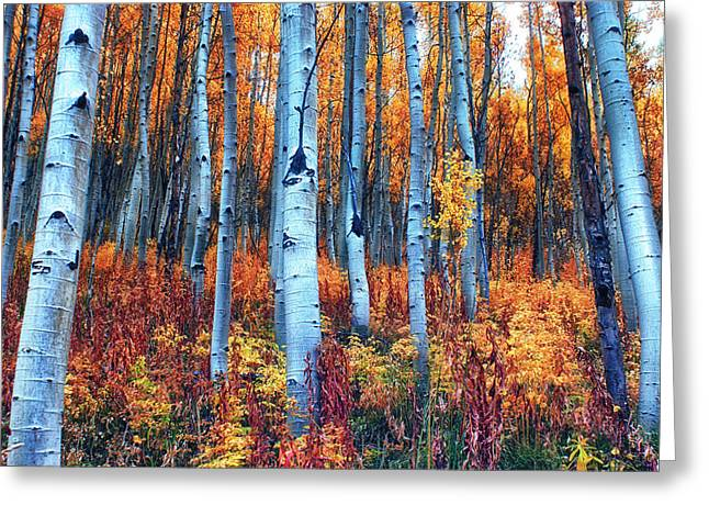 Colorful Aspens Greeting Card by Brian Kerls