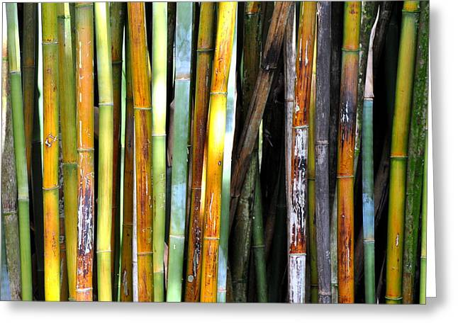 Greeting Card featuring the photograph Colorful Bamboo by Jodi Terracina