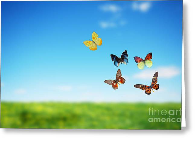 Colorful Buttefly Spring Field Greeting Card by Michal Bednarek