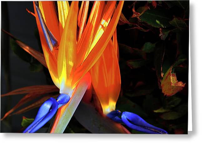 Greeting Card featuring the photograph Colorful California Morning by Clayton Bruster