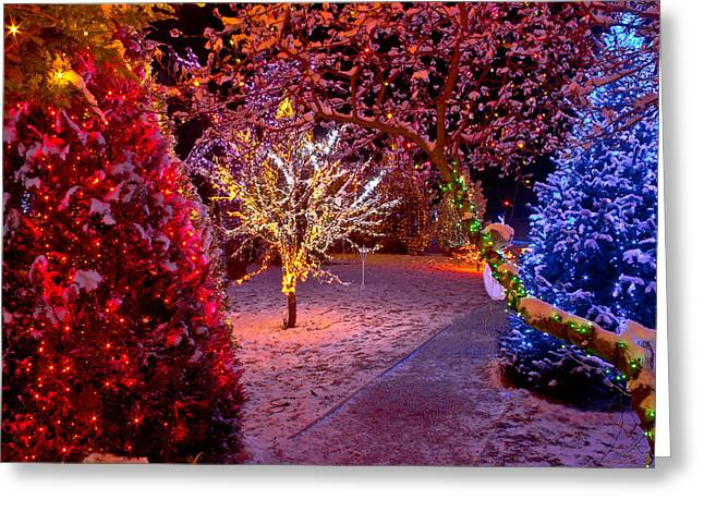 Colorful Christmas Lights On Trees Greeting Card by Brch Photography