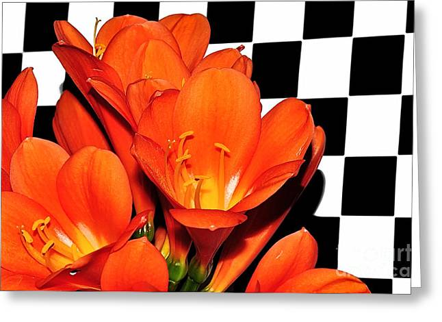 Colorful Clivias On Black And White Checks Greeting Card