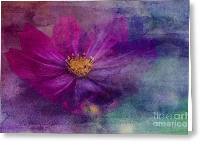 Colorful Cosmos Greeting Card