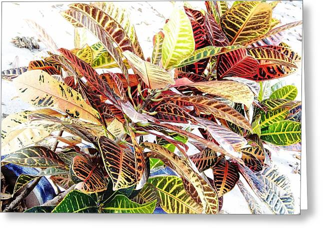 Colorful - Croton - Plant Greeting Card