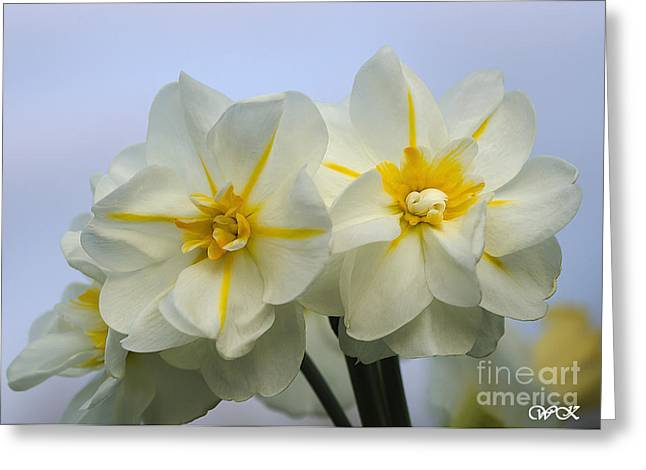 Greeting Card featuring the photograph Colorful Daffy's by Wanda Krack
