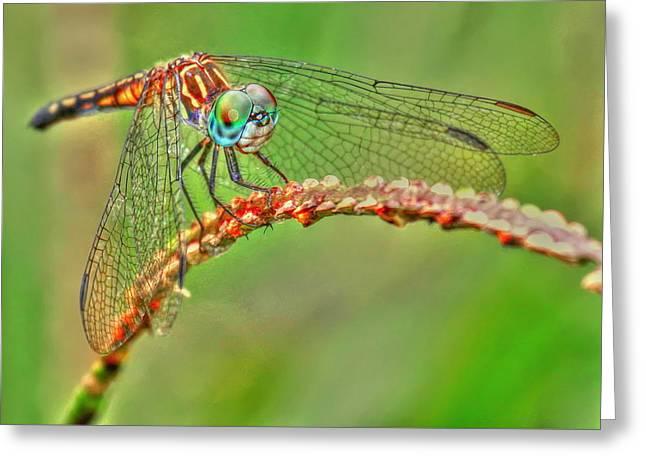 Colorful Dragonfly Greeting Card by Myrna Bradshaw