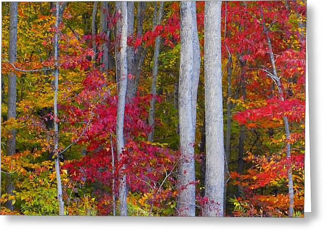 Colorful Fall Forest Greeting Card by Scott Cameron