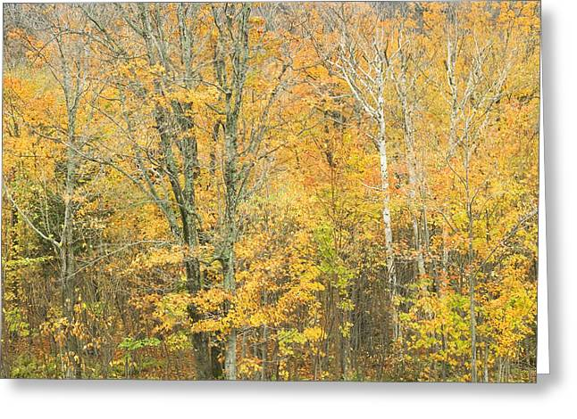 Colorful Fall Trees In Maine Greeting Card by Keith Webber Jr