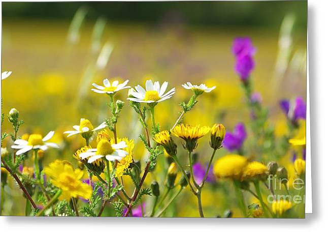Colorful Flowers Greeting Card by Boon Mee