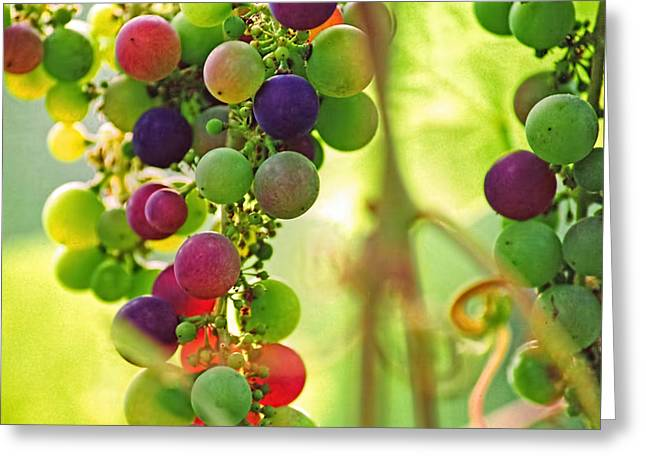 Colorful Grapes Greeting Card by Peggy Collins