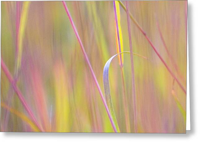 Colorful Grasses At The Tall Grass Greeting Card by Dennis Fast / Vwpics