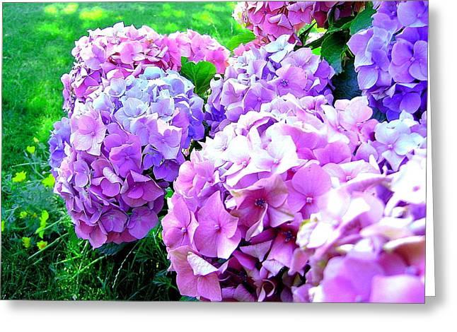 Colorful Hydrangeas Greeting Card by Mavis Reid Nugent