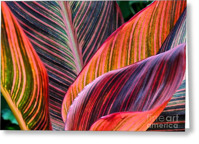 Colorful Leaves Greeting Card by Eve Spring