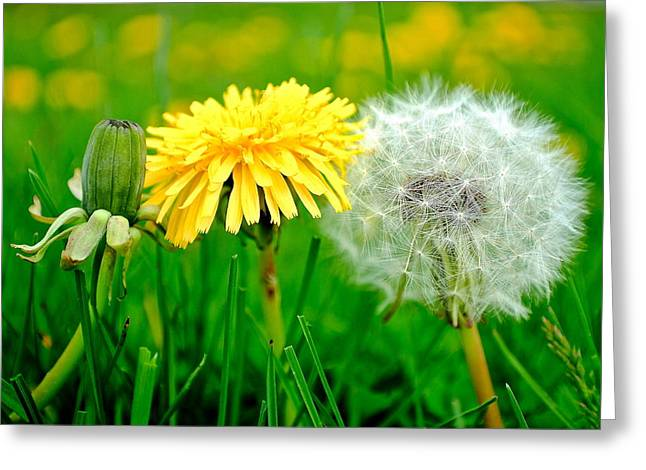 Colorful Macro Greeting Card by Frozen in Time Fine Art Photography