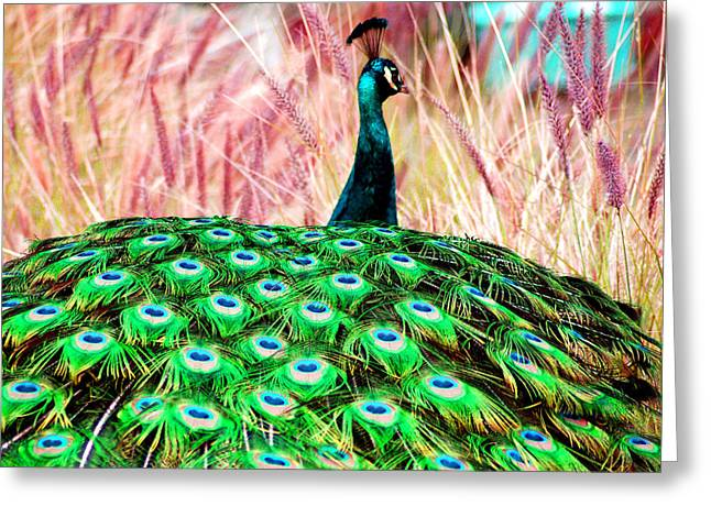 Greeting Card featuring the photograph Colorful Peacock by Matt Harang