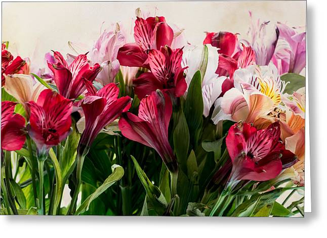 Colorful Peruvian Lillys Greeting Card