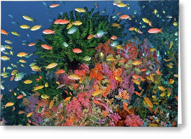 Colorful Reef Scenic, Triton Bay, Fak Greeting Card by Jaynes Gallery
