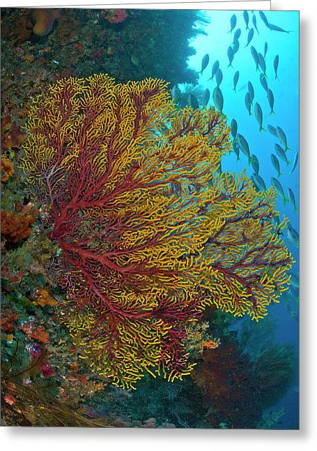 Colorful Sea Fan Or Gorgonian Coral Greeting Card