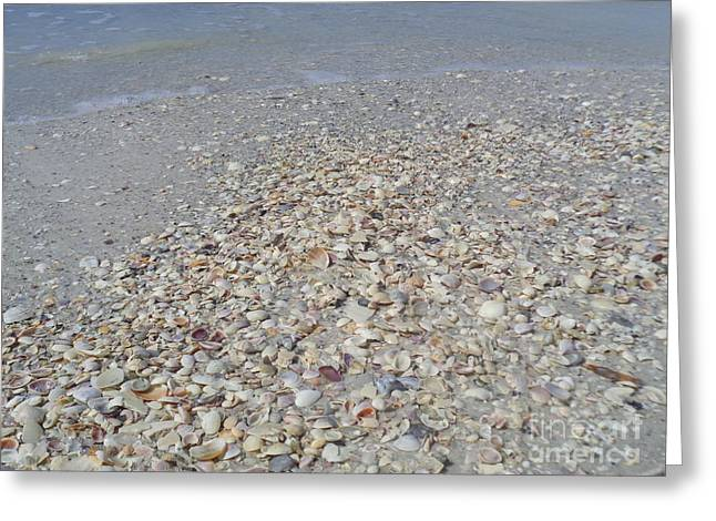 Colorful Shells At The Water's Edge Greeting Card