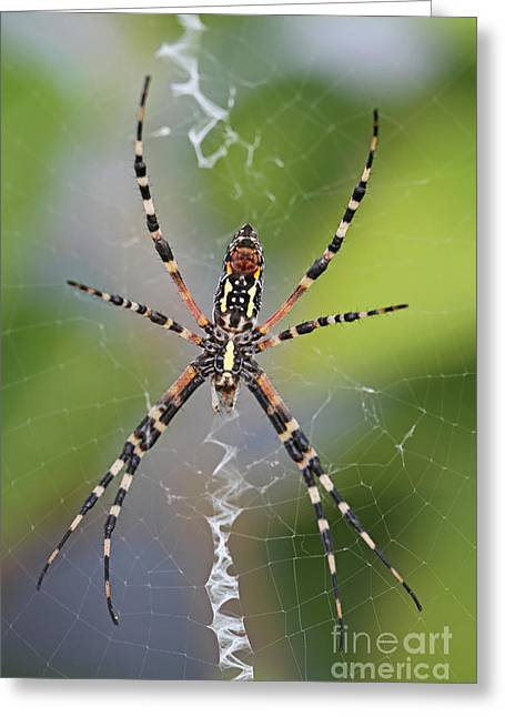Colorful Spider Greeting Card by Kevin McCarthy
