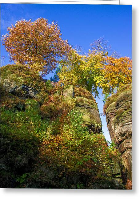 Colorful Trees In The Elbe Sandstone Mountains Greeting Card