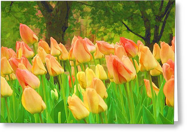 Rose Cottage Gallery Mixed Media Greeting Cards - Colorful Tulips Greeting Card by Barbara McDevitt