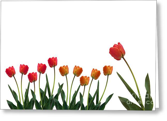 Delivery service greeting cards page 6 of 7 fine art america colorful tulips greeting card m4hsunfo